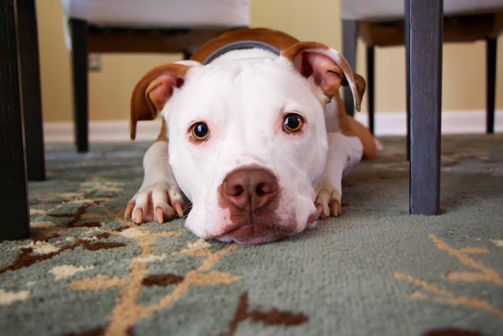 Hundehaftpflicht-Vergleichen Ja oder Nein