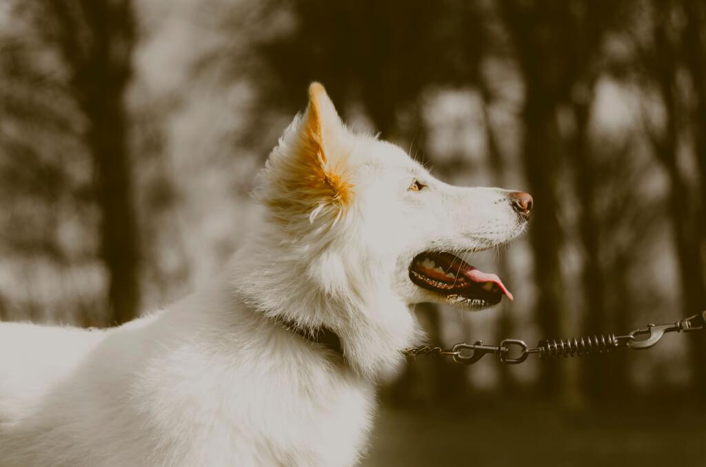 Hundehaftpflicht-Vergleichen Leinenzwang