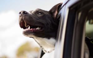 Hundehaftpflicht-Vergleichen Vergleichen Verstehen
