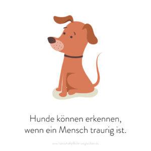 Hundehaftpflicht-Vergleichen-FunFact-1
