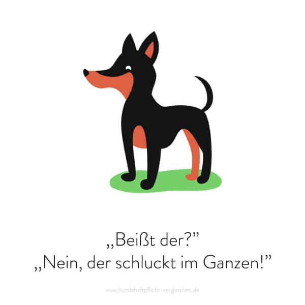 Hundehaftpflicht-Vergleichen-FunFact-4