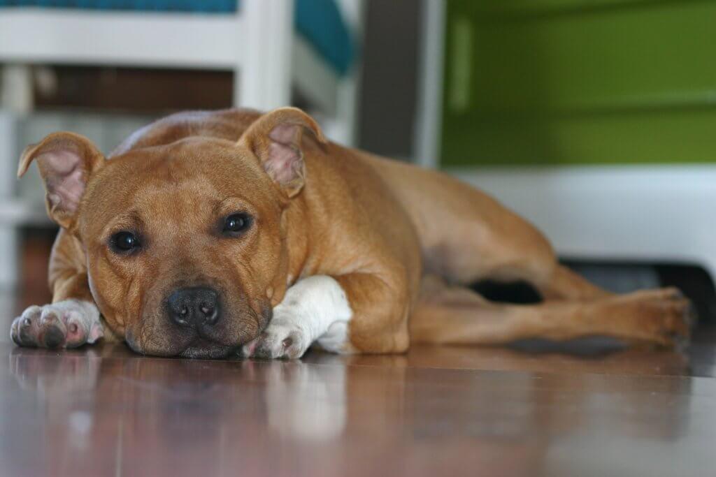 hundehaftpflicht-staffordshire