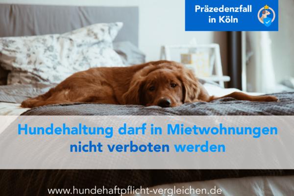 Hund Wohnung trotz Verbot