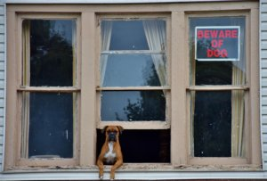 Hund Lärm Wohnung verboten