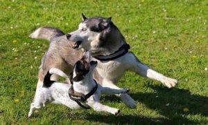 Hunde Haftpflichtversicherung Beißvorfall