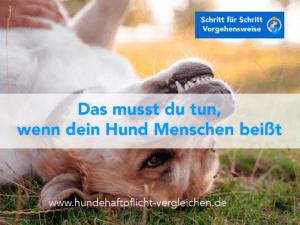 Hund bissig Mensch Hundehaftpflicht