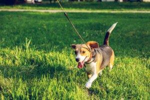hund-anleinpflicht-leinenzwang