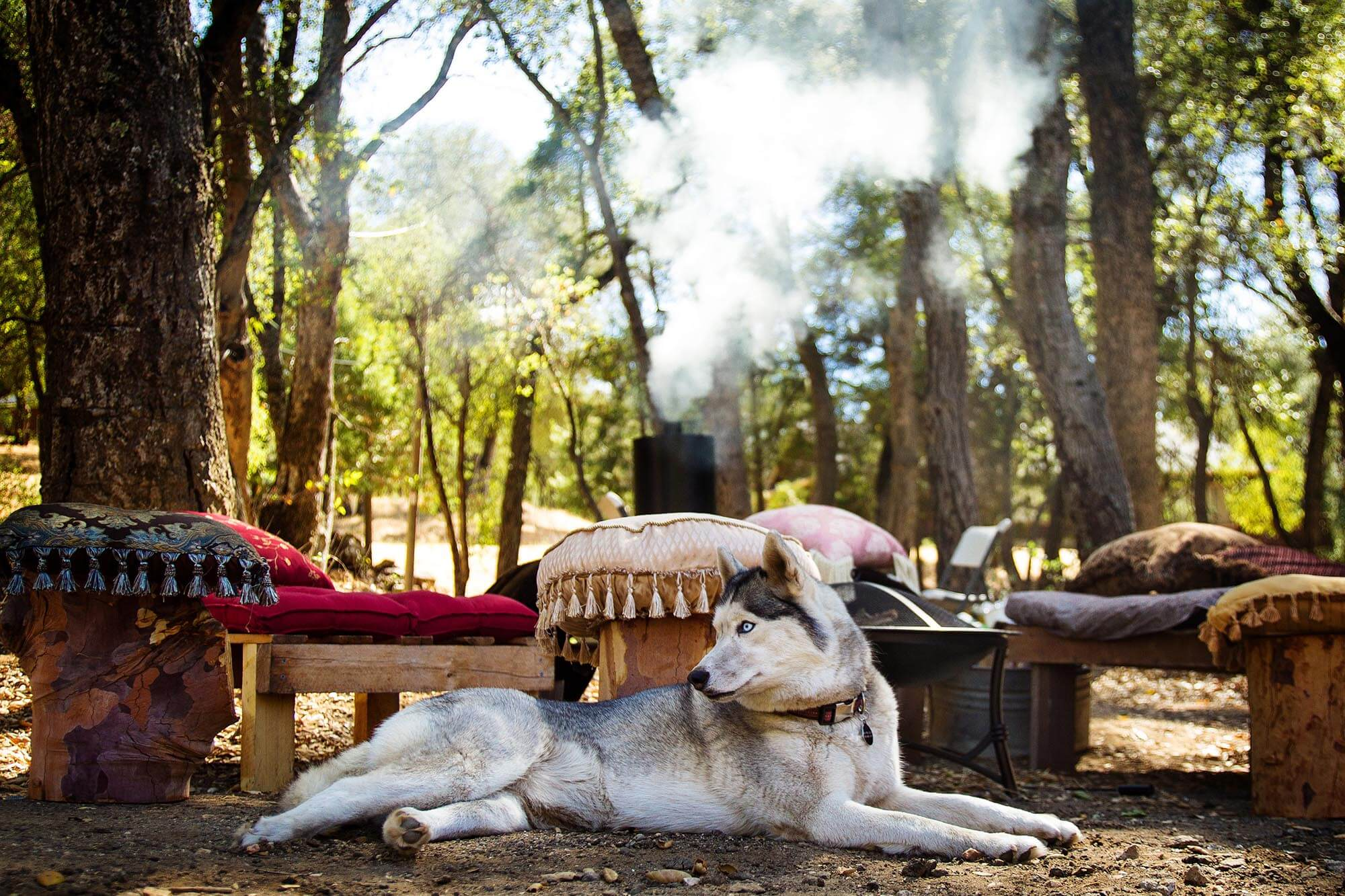 Hundehaftpflicht-Vergleichen Deckungssumme