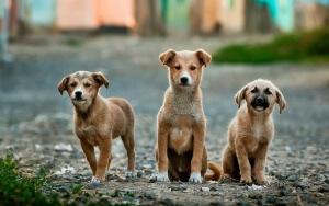 Hundehaftpflicht-Vergleichen Welpen
