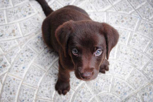 Hundehaftpflicht-Vergleichen Welpe