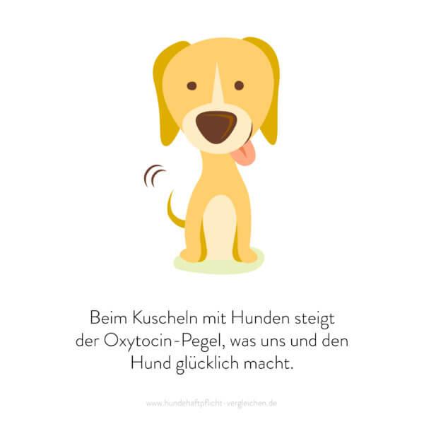 Hundehaftpflicht-Vergleichen-FunFact-2
