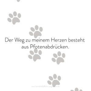 Hundehaftpflicht-Vergleichen-FunFact-3