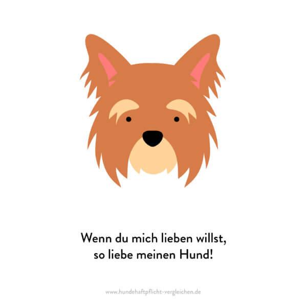 Hundehaftpflicht-Vergleichen-FunFact-8