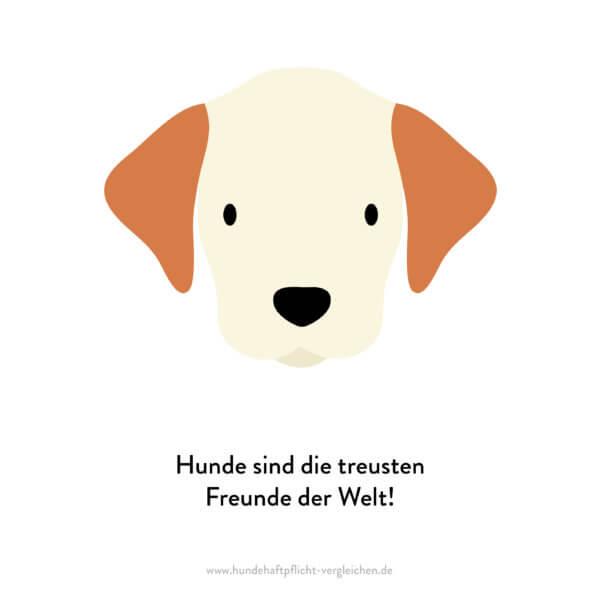 Hundehaftpflicht-Vergleichen-FunFact-9