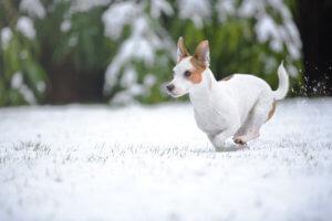 hundehaftpflicht-terrier
