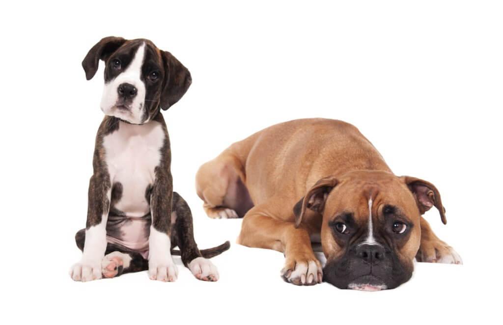 hundehaftpflicht-hunderassen