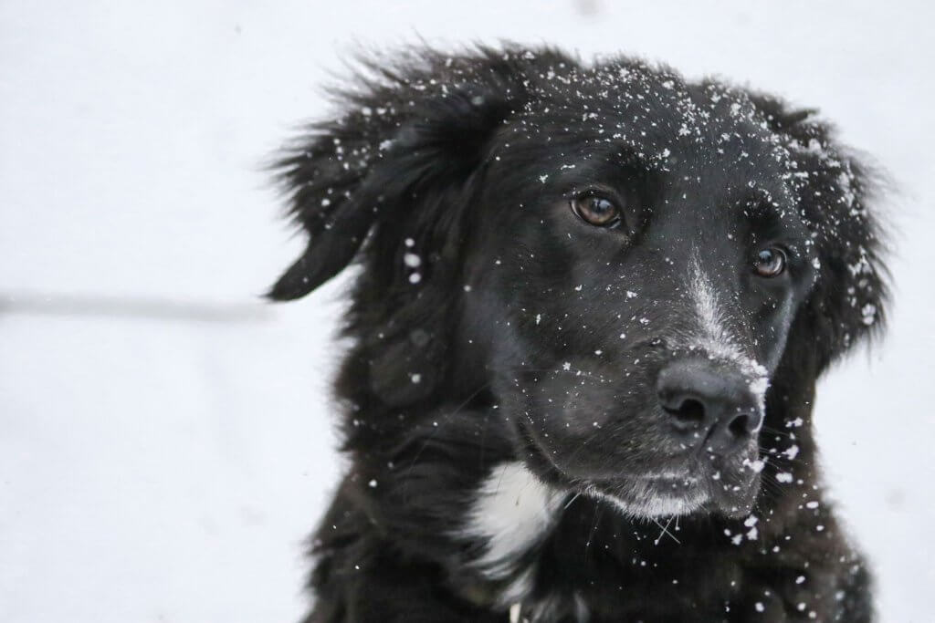 Hundehaftpflicht Vergleichen Hund im Schnee