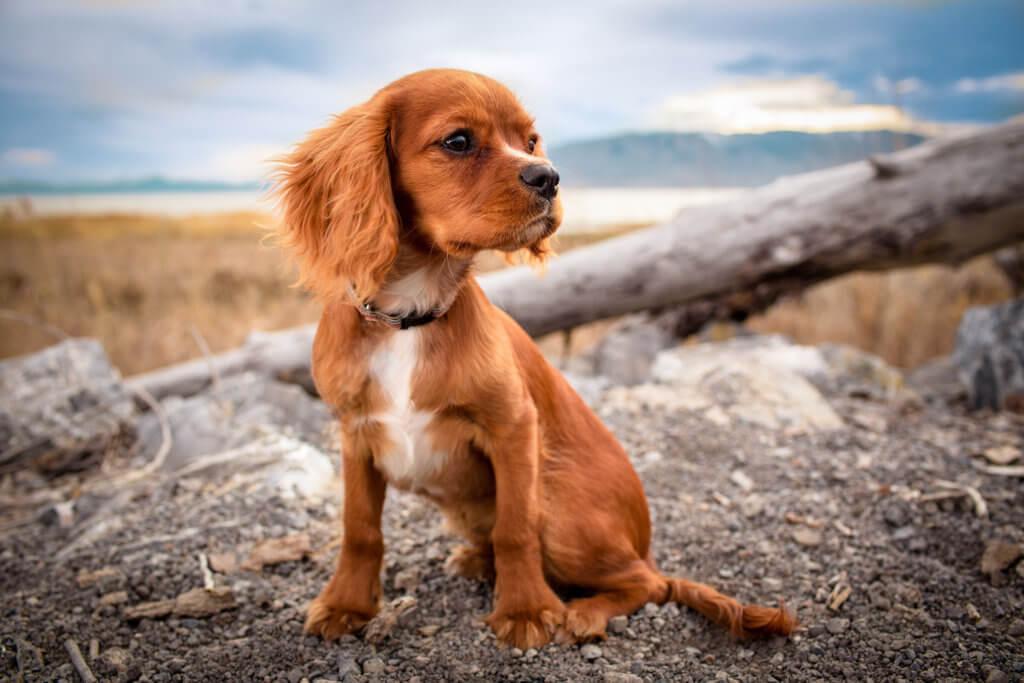 Hunde Erziehung Sitz