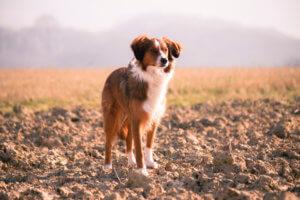 Hundehaftpflicht Vergleichen & Sparen
