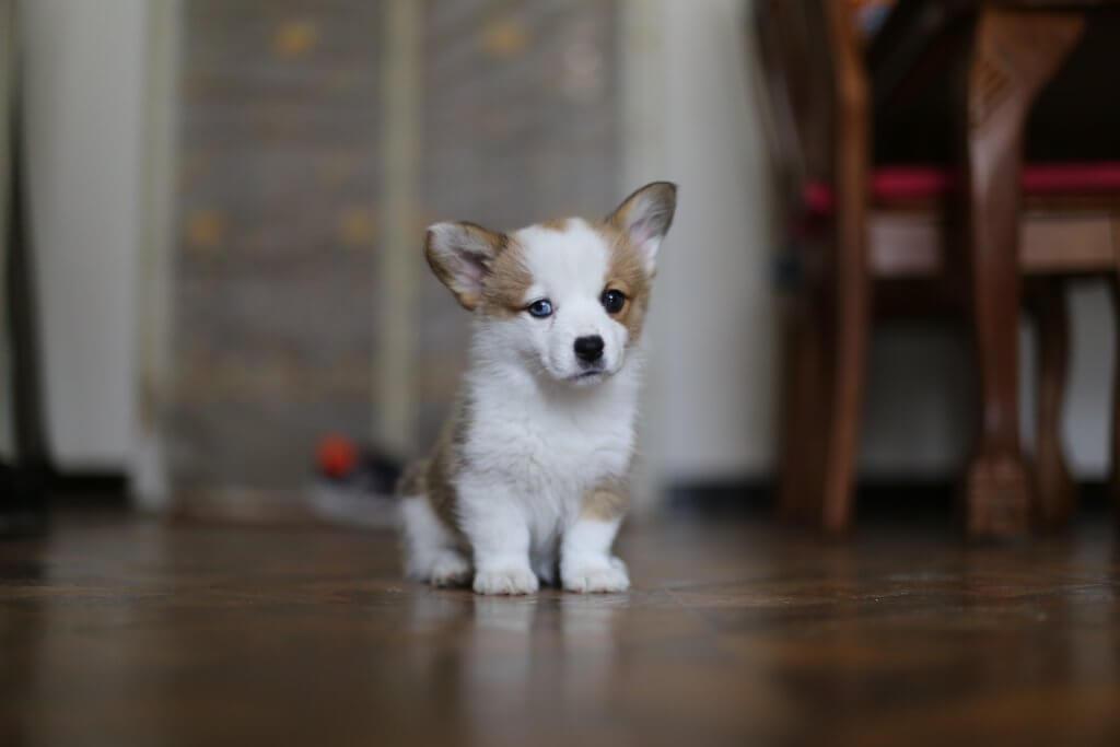 Hund Mietwohnung ohne Erlaubnis