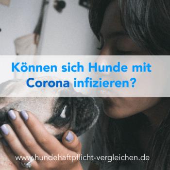 Corona Virus Hund