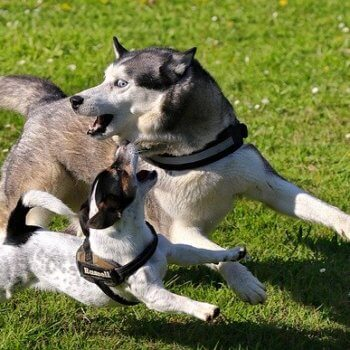 Hund Biss durch anderen Hund Haftpflicht