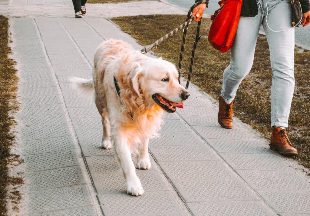 gassi service hund steuerlich absetzbar