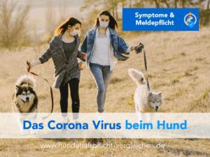 Corona Infektion beim Hund
