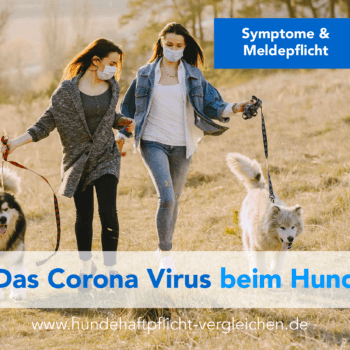 Corona Infektion beim Hund